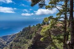 La Palma (Hans van Bockel) Tags: 1680mm d7200 hansvanbockel lapalma nikkor nikon oceaan vakantie puntagorda canarias spanje es uitzicht view santo domingo tijarafe pijnboom den canarische pinus canariensis lp114