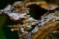 die Spuren der Zeit /// the traces of time (Pixelchen1) Tags: nikon5500 nikon105mmf28 macro manuellerfocus wood holz colors farben structure strukturen mypersonalmonday inexplorethanks
