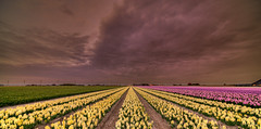 From Dusk till Dawn. (Alex-de-Haas) Tags: 11mm adobe blackstone d850 dutch hdr holland irix irix11mm irixblackstone lightroom nederland nederlands netherlands nikon nikond850 noordholland photomatix photomatixpro beautiful beauty bloem bloemen bloementeelt bloemenvelden cloud clouds cloudscape drama dramatic floriculture flower flowerfields flowers hyacint hyacinten hyacinth hyacinths hyacinthus hyacinthusorientalis landscape landschaft landschap lente lucht mooi nature natuur polder skies sky skyscape spectaculair spectacular spring sun sundown sunset wolk wolken zonsondergang