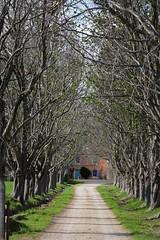 Viale Primaverile (fotomie2009) Tags: provence provenza france francia countryside campagna spring primavera viale alberi platani trees tree lined avenue