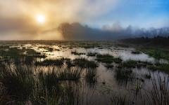 Pantano Al Amanecer (Fernando Ruz R.) Tags: amanecer pantano mist niebla neblina swamp humedal valdivia