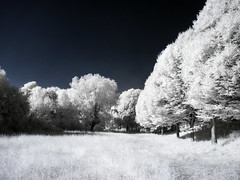 Mountsfield Park (blackwoodse6) Tags: infrared ir blue white foilage canon catford se6 lewisham park londonparks southlondon southeastlondon canong10 720nm