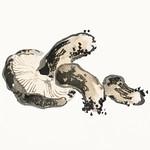 Shitake mushroom by Kōno Bairei (1844-1895). Digitally enhanced from our own original 1913 edition of Barei Gakan. thumbnail