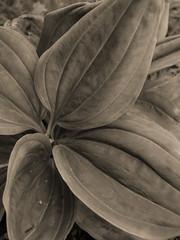 Vercors, 2018 (Olivier BERTRAND) Tags: vercors blackandwhite blackandwhitephotography digitalphotography forest forêt hiver isère landscape lumix25mm lumix landscapephotography monochrome micro43 noiretblanc nature naturallight olivierbertrand olympusem5markii 25mm winter woods neige primelens