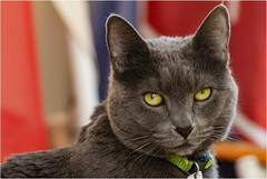 _DSC0608 (Lucio_Vecchio) Tags: nikon zafira gatos cats mascotas friends amigos retratos animales
