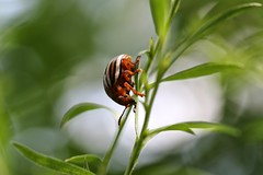 Grasping the present dimension (mpalmer934) Tags: insect bug scifi spacetime