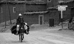 On the road again (thierry_meunier) Tags: afrique hautatlas maroc morocco ngoum tizinetimi ane animal berger car col farmer homme landscape man montagne mountain mountainpass mule paysage paysans road roadtrip route travel valley vallée voiture voyage