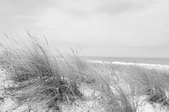 DSC_9462 (nicolas.blanchard83) Tags: landes dunes oyat vent nature moliets