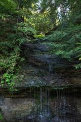 moss vines branches (r3d.rav3n) Tags: sarver pennsylvania unitedstates us