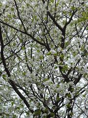 a (11) (hiromi89) Tags: japan beauty beautiful scenery flower wood pond