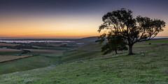 Just me, the sheep and the rabbits (Through Bri`s Lens) Tags: sussex steyning bramber sheep rabbits sunrise trees clouds brianspicer canon5dmk3 canon1635f4 leefilters