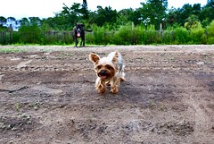 TONGUES OUT (david11eiu) Tags: walking animal dog pink green colorful colors farm out tongues happy dogs tree soil grass park sky field dirt