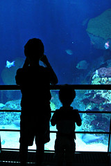 Brothers (Throwingbull) Tags: national aquarium baltimore md maryland aquatic animals isaiah gabriel silhouette