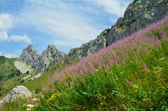 Col vert (Villard de Lans, Vercors) (HervelineG) Tags: vercors colvert montagne mountain fleurs flowers sooc d7000 isère flancdemontagne
