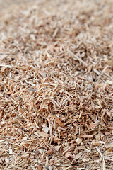 Residual Sawdust 001 (Freres Lumber Co.) Tags: mpp mass plywood panel timber tall wood freres lumber clt