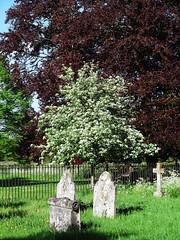 Pretty Tree (catrionatv) Tags: railings graveyard priests winchester stcross churchyard corner southeast tomestones graves gravestones