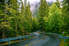 To the hills and mountains (Travellers Travel Photobook) Tags: canon banff canada tree forest forestmonitoring canadianforest nationalparks naturallight nature nationalgeographic banffnationalpark tourist touristattraction tourismincanada