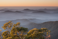 Misty Mountains (Eduardo_il_Magnifico) Tags: mist mountains sunset sunrise goldenhour colour sky outdoors hills fog cloud early golden tree nature armidale ebor newenglandnationalpark pointlookout newengland newsouthwales nsw australia nikond750 tamron70300mm nisi 3stophardgrad tripod