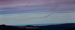 IMG_2133 (CJW74) Tags: ogwen valley gwynedd wales uk red arrows royal air force