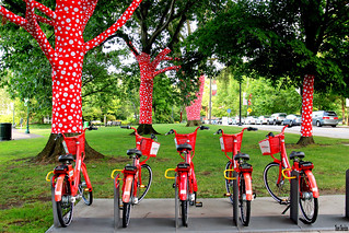 Red Bikes and Trees