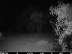 2018-06-24 03:19:15 - Crystal Creek 3 (Crystal Creek Bowhunting) Tags: crystal creek bowhunting trail cam
