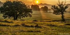 Sunrise on the Farm (travelphotographer2003) Tags: sunrise clouds dramatic colorful sky skies cloud orange rays appalachianmountains alleghenymountains glory brightness beautyinnature usa weather agriculture animalhusbandry webstercounty westvirginia thomasrfletcher familyfarm appalachianfarm panoramic 12 mist