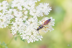 Macro Chavigny (Thierry Rambaux) Tags: macro insecte chavigny forêt 2018 aout tamron 90mm