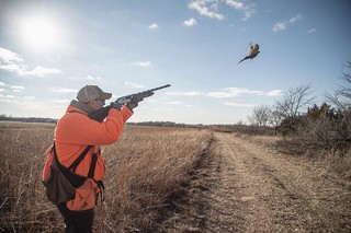 Kansas Pheasant Hunt 37