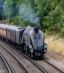 60009 Wokingham 21 August 2018 (7) (BaggieWeave) Tags: berkshire wokingham lswr lner a4 pacific 462 60009 unionofsouthafrica steamengine steamlocomotive steamtrain steam cathedralsexpress