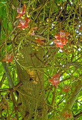 Yes!  The Right Way! (Cornishcarolin. Stupid busy!! xx) Tags: cornwall httpswwwedenprojectcom nature flowers plants
