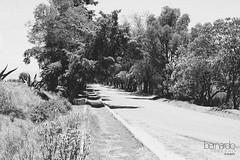 L O N E L I N E S S (Bernardo Serrano) Tags: canon blancoynegro blackandwhite bw bn monocromático conceptual road camino soledad loneliness