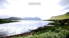 Lofoten_July_2018_XXI (LyonelPerabo) Tags: nature arctic polar norway norwegian scandinavia north northern northnorway lofoten vestvagoy vestvågøy nordland fjord water sea ocean flowers lush green blue sky mountain mountains landscape outside summer 2018