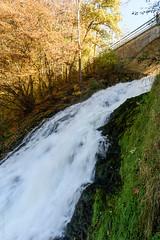 _DSC0012.jpg (wim_tavernier) Tags: coo wallonia waterfall belgium liège ardennes europe fall stavelot ardennen autumn wallonie wallonië automne herfst belgië be
