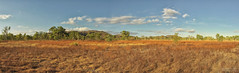 floodplain (Peedie68) Tags: nt northernterritory australia maryrivernationalpark floodplain panorama pano