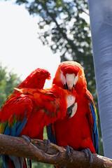 Couple Goals (Dani Stanevicz) Tags: photography wildlife animal animals macaw bird birds macaws zoo nature avian