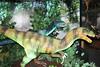 IMG_0221 (jmac33208) Tags: mystic aquarium connecticut fish