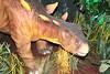 IMG_0215 (jmac33208) Tags: mystic aquarium connecticut fish