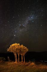 Tree under the stars (Peter Bruijn) Tags: tree milky milkyway nikon nikond700 d700 digital galaxy astro astrophotography astrophoto star stars starphotography night nighttime nightshot chivay peru colca canyon 24mm nightphotography dark skies