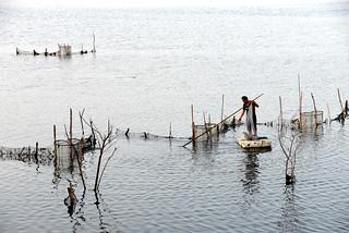 Shrimp cage 蝦籠