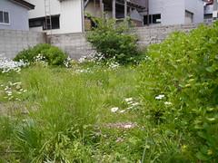 Blooming merrily (しまむー) Tags: panasonic lumix gx1 g 20mm f17 asph natural train tsugaru free pass 津軽フリーパス