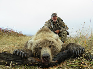 Alaska Brown Bear Hunt - Peninsula 8