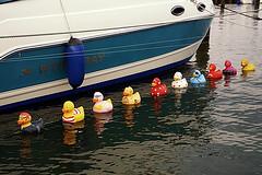 Duck Parade - Entenparade (ingrid eulenfan) Tags: entenparade altefähr strelasund hafen marina ente badeente duck rubberduck quitscheente alpha6000 tamron16300mm boot wasser boller