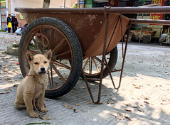 Street Puppy (cowyeow) Tags: street composition travel china chinese asia asian hunan village road city rural puppy dog little alone sad wheelbarrel tied pet dirty young cute