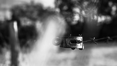 Connection (Of Light & Lenses) Tags: fence abstract meadow weide zaun abstrakt featheredbokeh mzuiko1225mmpro monochrome