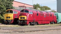 D821 and D1015 in Kidderminster Yard 11.08.2018 (Wolfie2man) Tags: class42 class52 westernchampion greyhound warship western westernhydraulic dieselhydraulic d821 d1015 kidderminstersvr severnvalleyrailway
