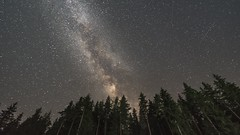 Go to the stars 1 (nickneykov) Tags: nikon d750 nikond750 irix 15mm irix15mm timelapse landscape milkyway stars sk nightsky forest meteorshower perseids govedartsi bulgaria trees