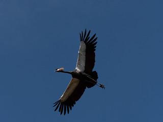 Flugshow im Vogelpark Walsrode