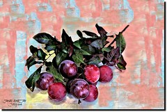 PLUMS FROM THE GARDEN (jawadn_99) Tags: colorful interrestingness ampqua usa america cafe river sutherlin oregon food center impretionism tranquil quiet calm sober static peaceful reflections fantasy abstract colors red blue winter scout art photgraphy representationalart digital modern expression computer design yellow cherries lihgthouse flora green fruit explore coth5