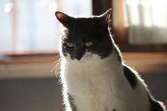 Non è giornata  :(( (carlo612001) Tags: gatto gatti gatta gattini cat cats kitten kittens angry arrabbiata