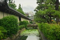 DSC_0008 (sxcxxhx) Tags: japan osaka kyoto hydrangea flower trip voyage 日本 大阪 京都 旅行